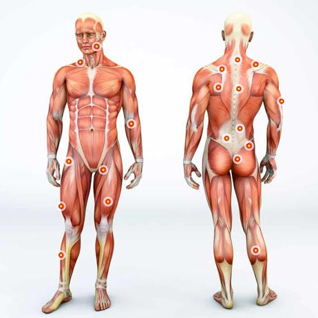 Fascia – The Forgotten System